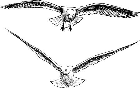 Sketches of the flying gulls
