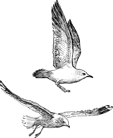 Vector drawings of the seagulls in the flight