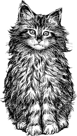 hairy legs: Vector Drawing of a fluffy domestic kitten