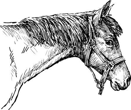 Sketch of the head of a harnessed horse
