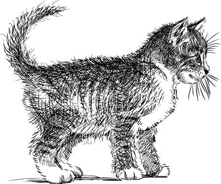 Croquis d'un chaton domestique Banque d'images - 81295835