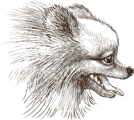 Vector drawing of the spitz head