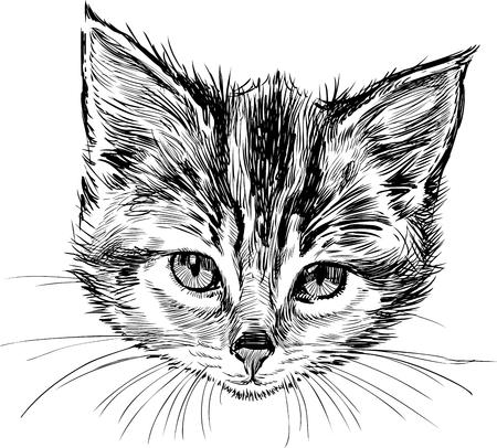Cabeza de un lindo gatito Foto de archivo - 81295905