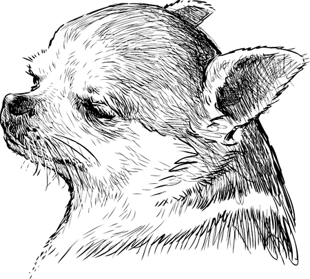 Sketch of a cute lap dog Ilustrace