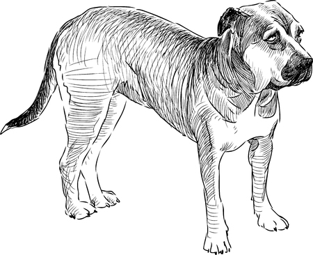 Sketch of a watching dog