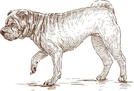 Vector tekening van een lopende sharpei Stock Illustratie