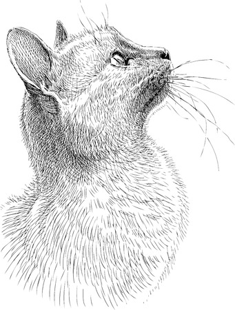Vector drawing of a watching cat