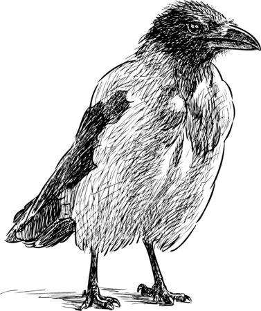 Sketch of a big crow
