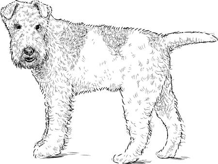 Vector sketch of a fox terrier