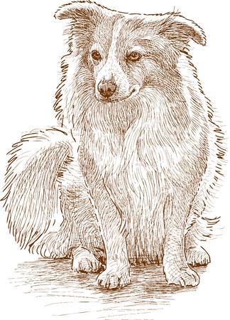 Dessin vectoriel d'un chien pelucheux mignon Banque d'images - 81509092