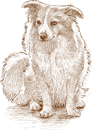 Vector drawing of a cute fluffy dog Illustration