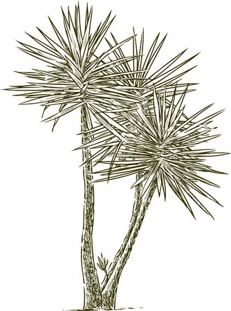 Sketch of a garden palm tree