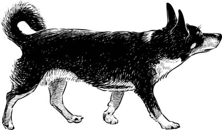 Vector drawing of a walking black dog