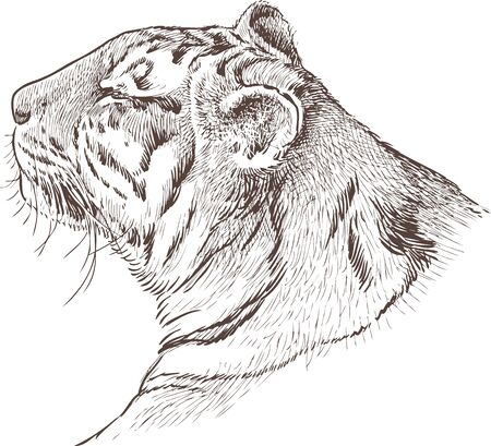 sears: Vector image of a tiger head