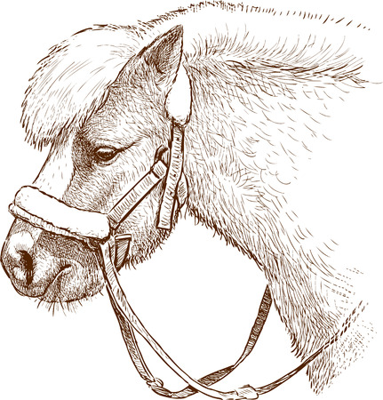 Vector drawing of a harnessed pony Иллюстрация