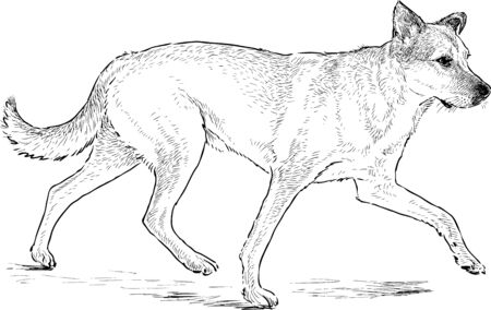striding: Sketch of a striding dog