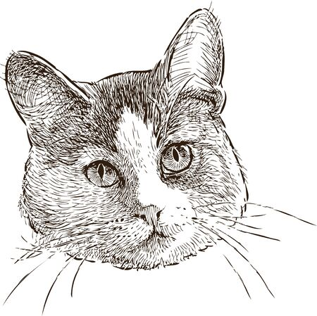 Sketch of the head of a house cat Illustration