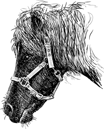 Vector drawing of the head of a harnessed pony