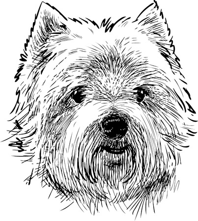 Portrait of a scottish terrier