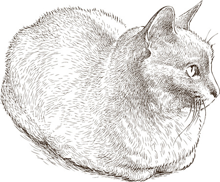 Vector drawing of a house cat