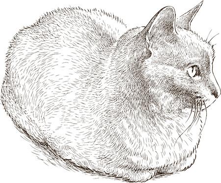 Vector tekening van een huis kat Stock Illustratie