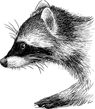 Vectorschets van een wasbeerhoofd Stock Illustratie
