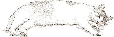 Sketch of a sleeping cat