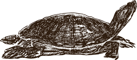 A Vector drawing of a sea turtle.