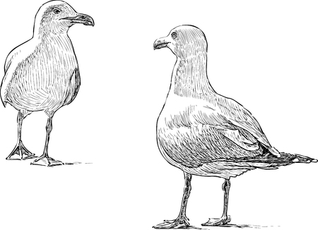 Sketch of the seagulls on the shore