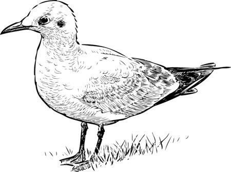 Vector image of a sea bird on a shore Illustration