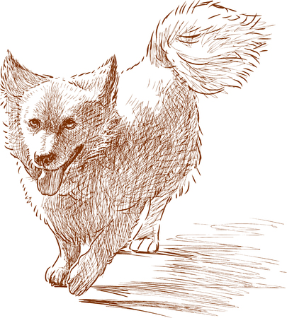 Sketch of a small fluffy dog