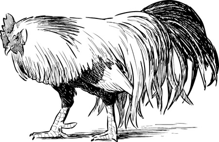 Sketch of a striding rooster