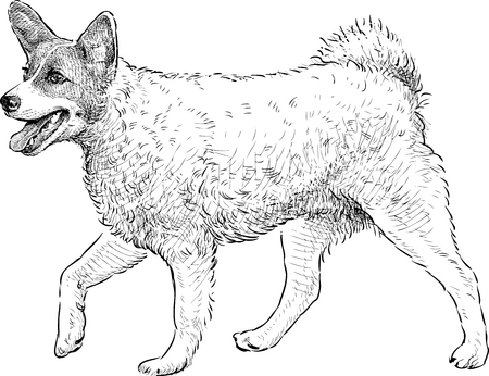 striding: Vector drawing of a striding dog