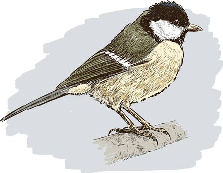A vector image of a little tomtit on a gray background.