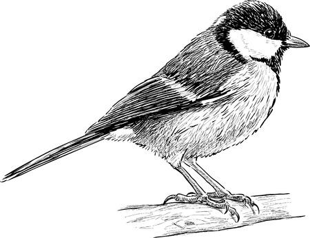 Vector sketch of a titmouse