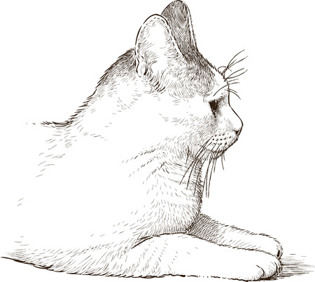 Vector drawing of a white cat