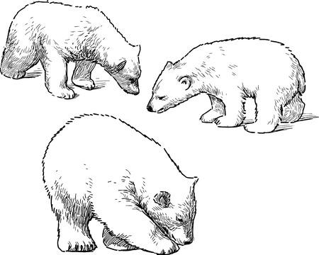 hand drawings of the babies polar bears vector