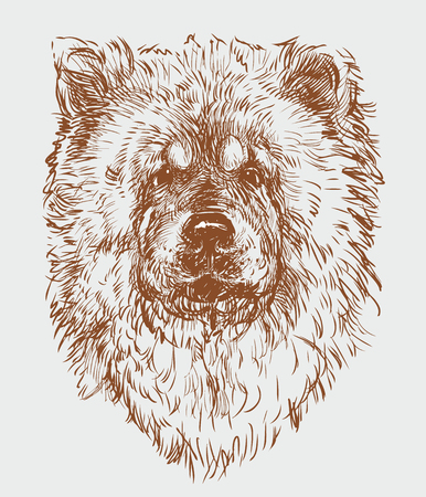 The portrait of a sketch of a chow-chow dog
