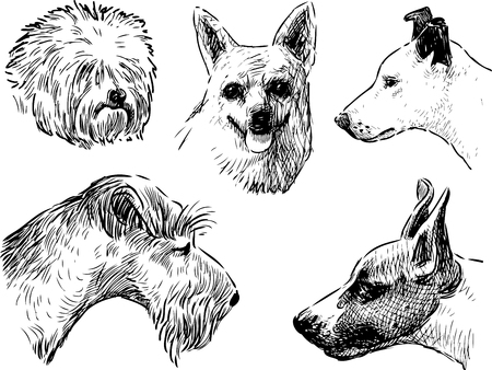 The heads of the different dogs breeds Illustration