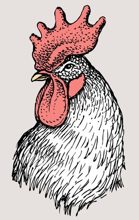 chick: Vector illustration of the head of a rooster