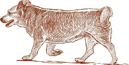 Sketch of a red walking dog. Vector illustration.