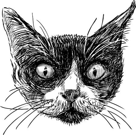 Sketch of the cat head. Vector illustration.