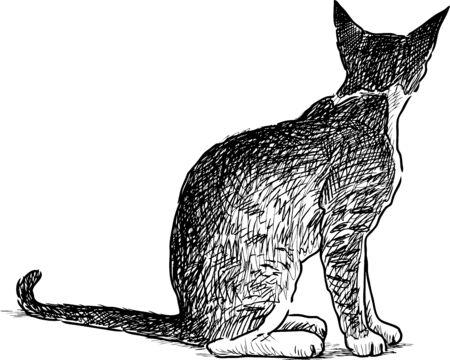 Sketch of a houmless kitten