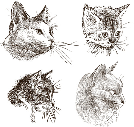 Sketches of the heads of the domestic cats illustration.