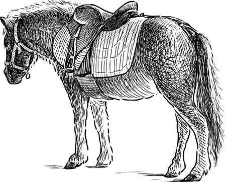 A pony for horseback riding