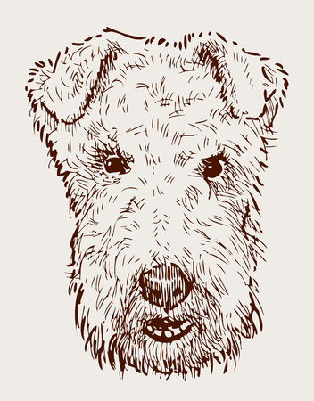 Illustration of the head of airedale terrier. Illustration
