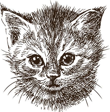 Portrait sketch of a small kitten