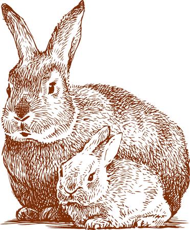 le lapin avec son ourson