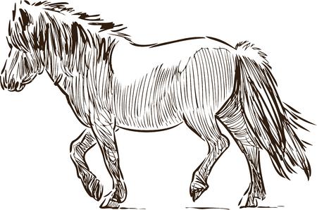 Sketch of a walking pony
