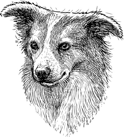 Portrait sketch of a lap dog